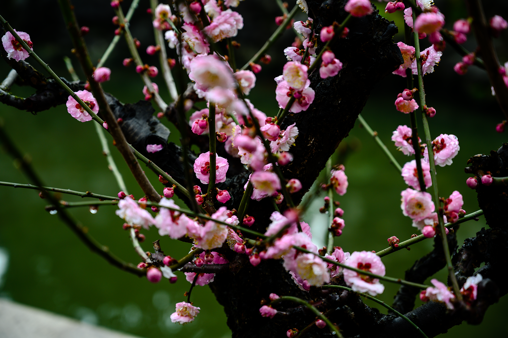 YuGarden_Blossom